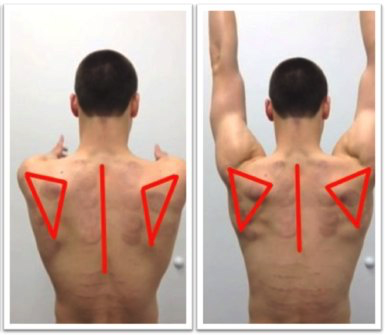 static-and-dynamic-scapula-position