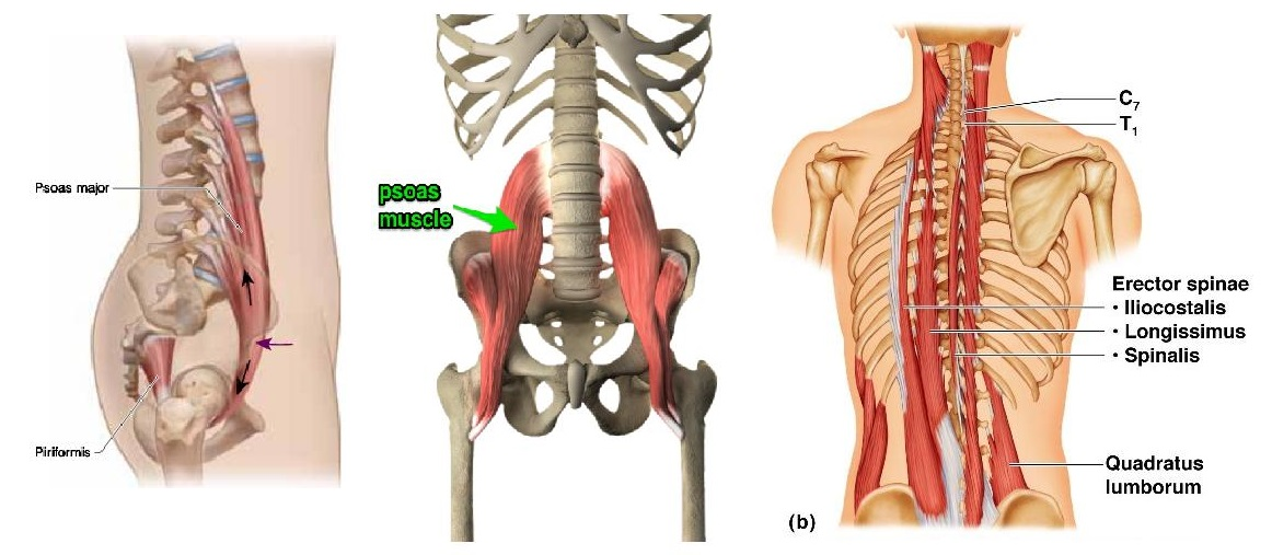 psoas-low-back