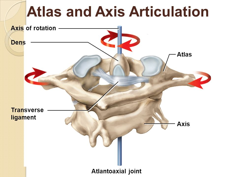 Atlas joint instability: Causes, consequences and solutions ...