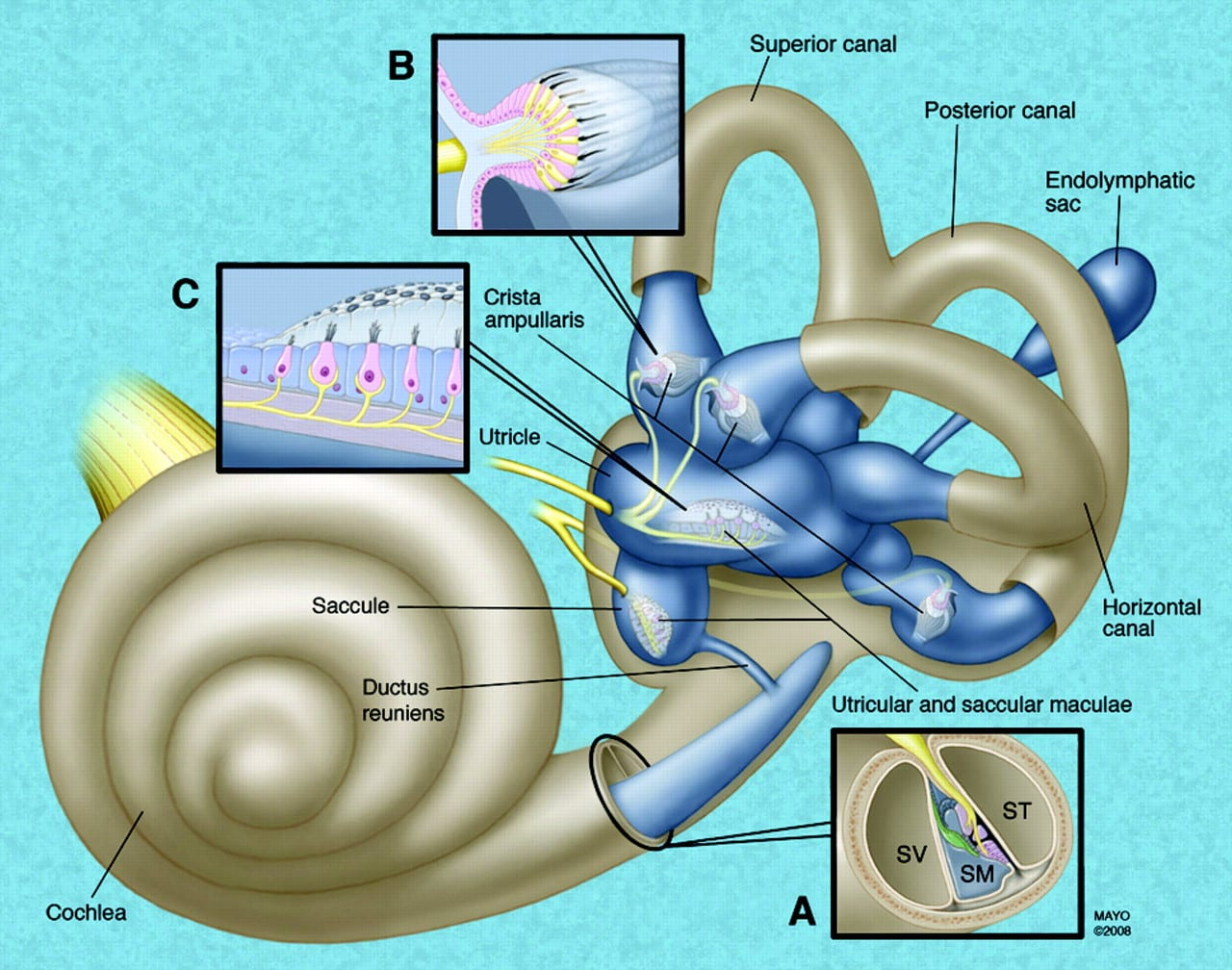 F1.large 2 - The association between tinnitus, the neck and TMJ