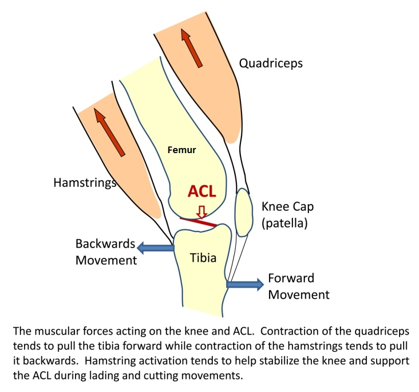 Resolve Your Knee Pain By Addressing Its Alignment Treningogrehab