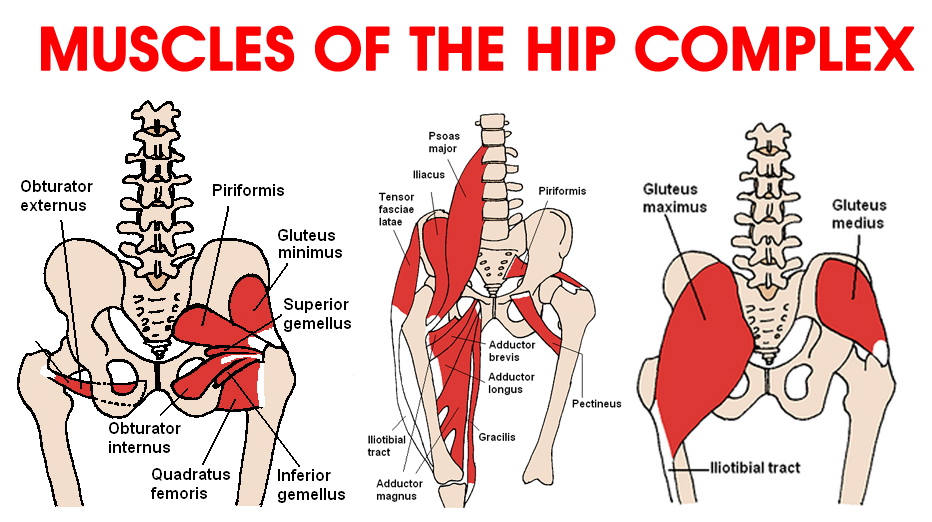 Various causes of hip pain, and how to fix it - Treningogrehab.no