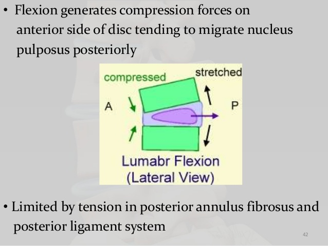 biomechanics-of-lumbar-spine-42-6381