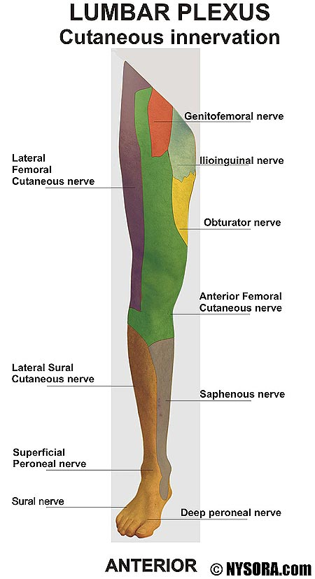 How to identify and treat lumbar plexus compression ...