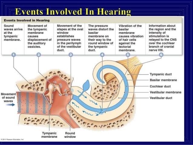 The association between tinnitus, the neck and TMJ